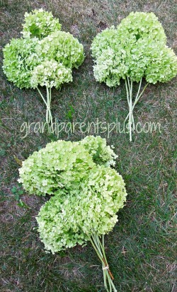 Using dried hysdrangeas in your decor   www.grandparentsplus.com