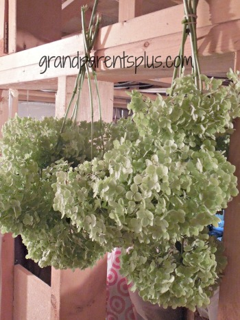 Using Dried Hydrangeas in Your Decor   www.grandparentsplus.com