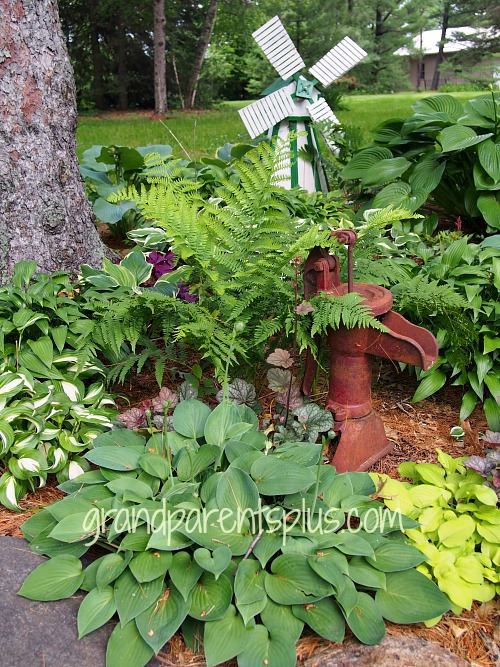 My Hosta Haven grandparentsplus.com