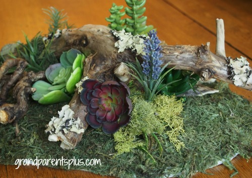 Tabletop Woodland Garden  grandparentsplus.com