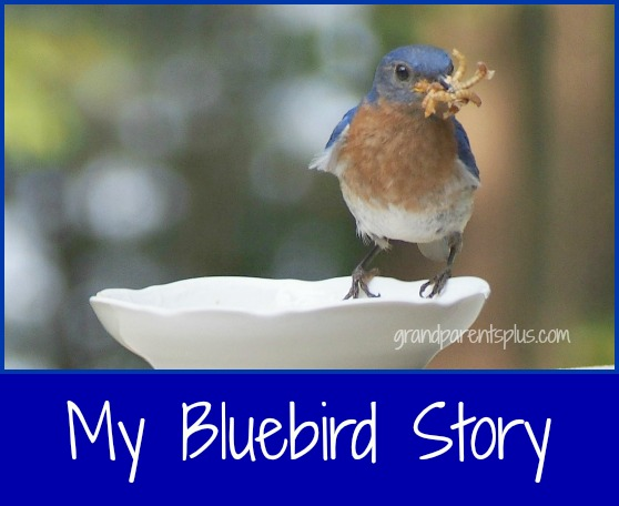 My Bluebird Story  grandparentsplus.com
